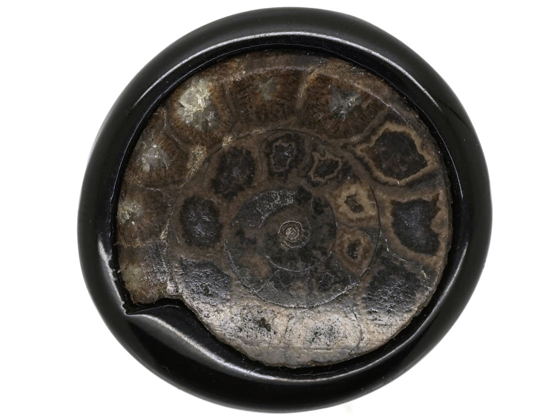 Victorian Jet & Ammonite Brooch